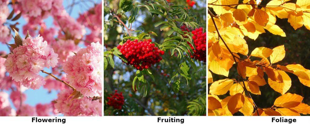 tree-garden-collage