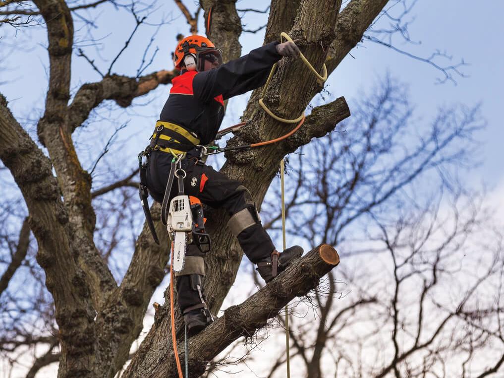 aerial-tree-work